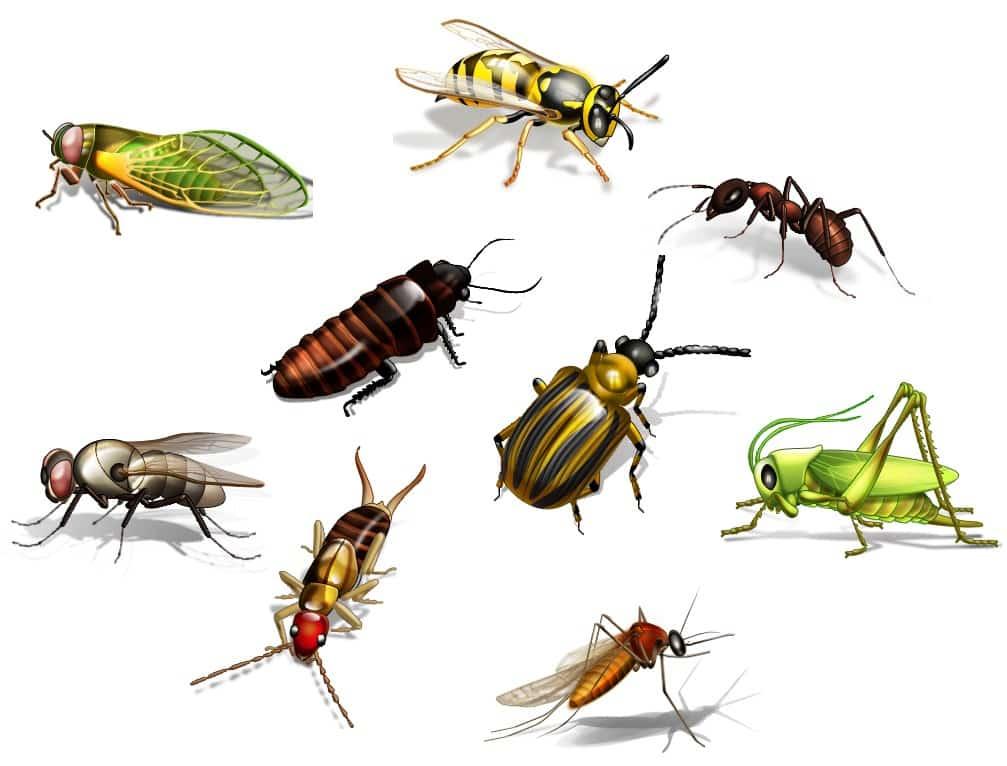 böcek alerji