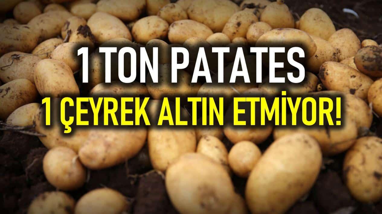 patates fiyatı