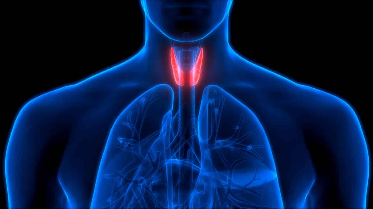 sebepsiz yorgunluk tiroit