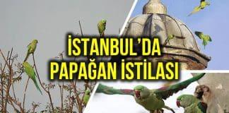 istanbul yeşil papağan
