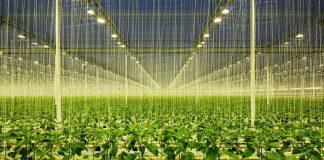 Hollanda tarım ihracatı 116 milyar doları aşarak rekor kırdı!