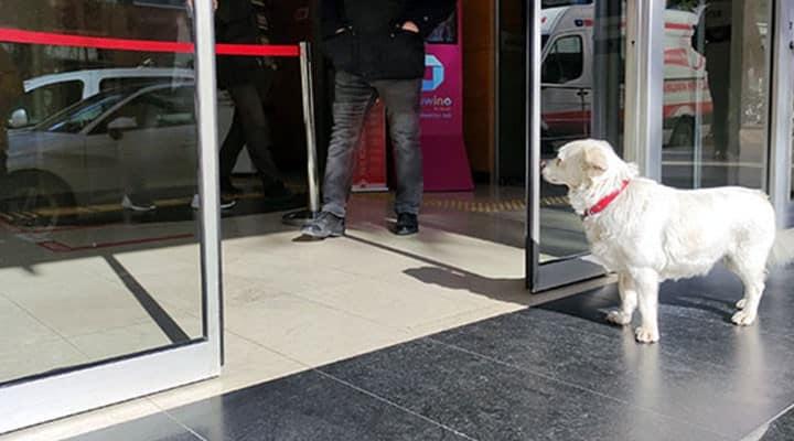 trabzon hastane kapısında sahibini bekleyen köpek