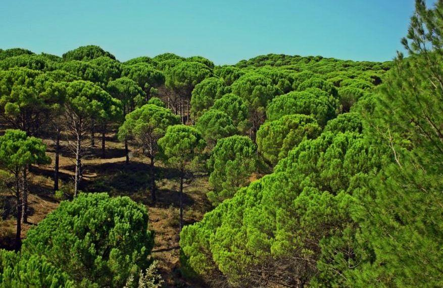 fıstıkçamı ormanı kozak yaylası