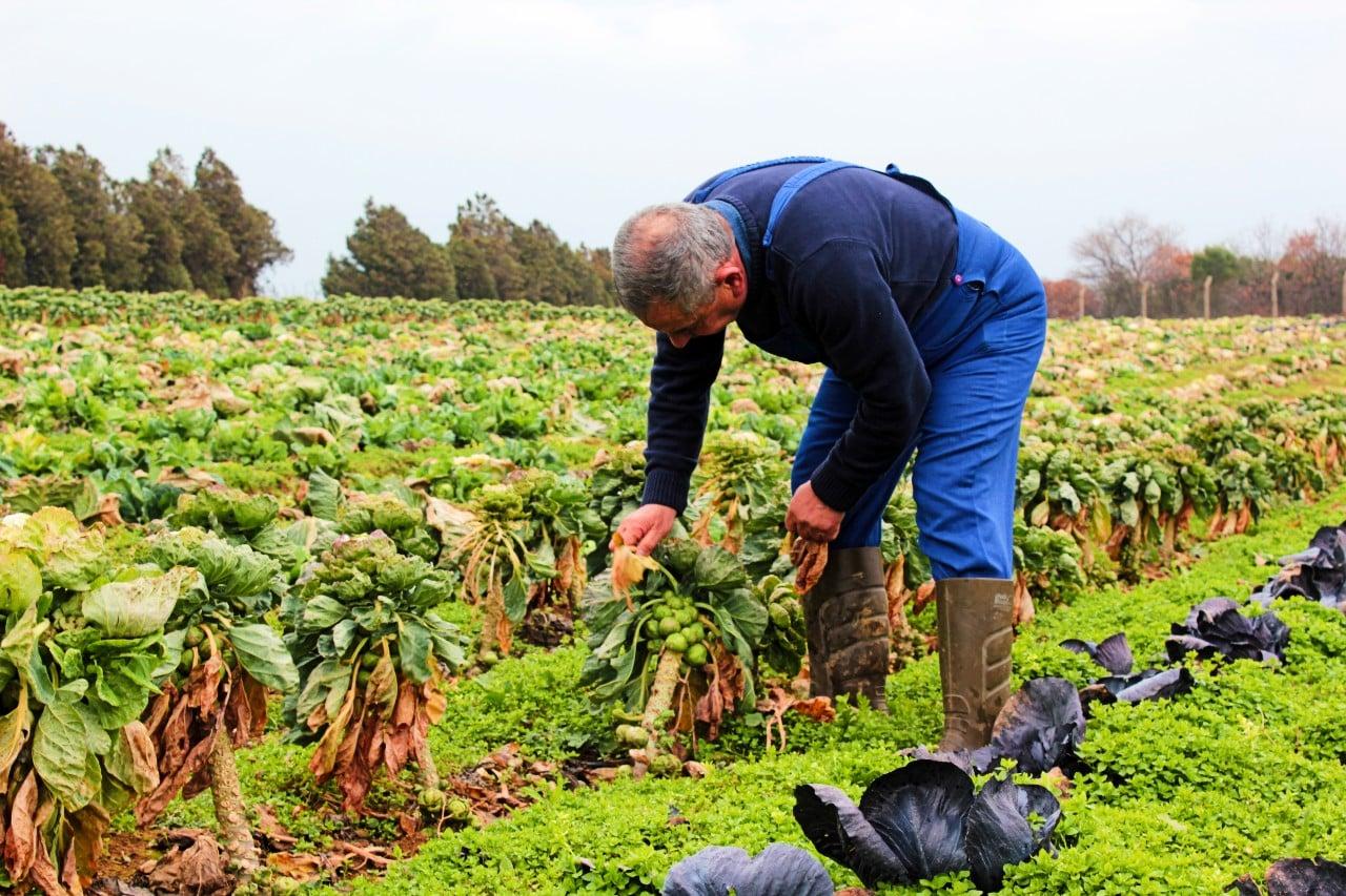 Pestisit zehirlenmeleri Türkiye çiftçilerin saçında bile pestisit kalıntısı var!