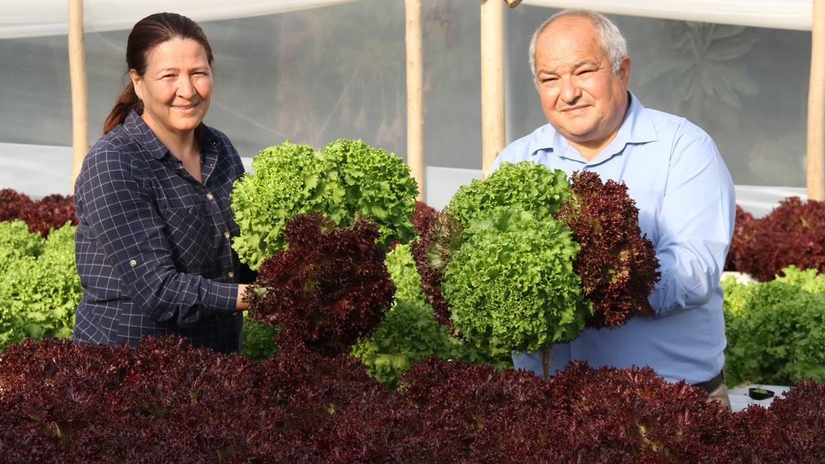 meliha adalı Ev kadınıydı çiftçi oldu: Marul üretiyor, ayda 4 bin lira kazanıyor
