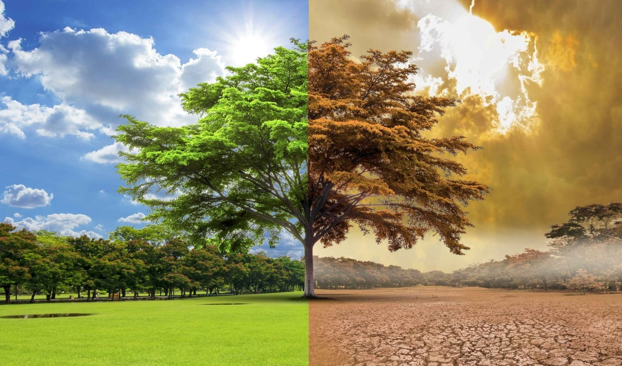 küresel ısınma gıda krizi