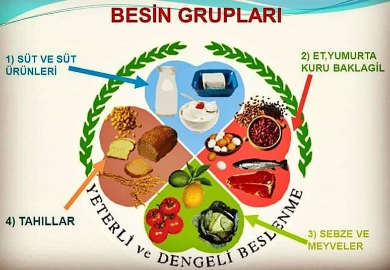 besin grupları