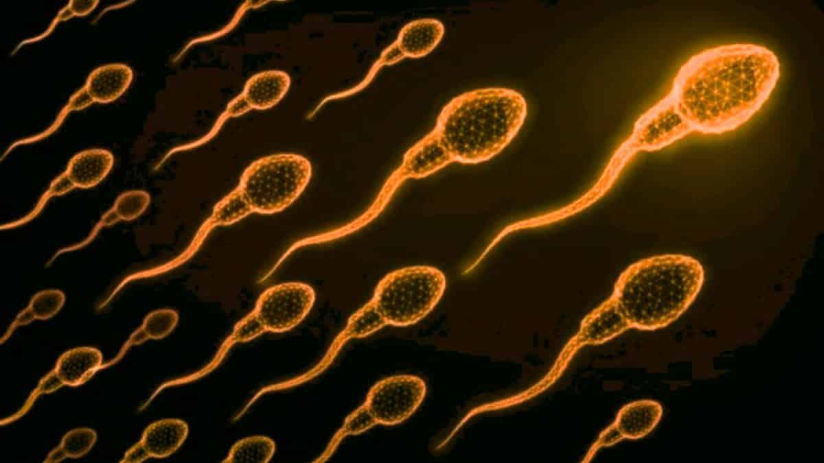 BionTech sperm