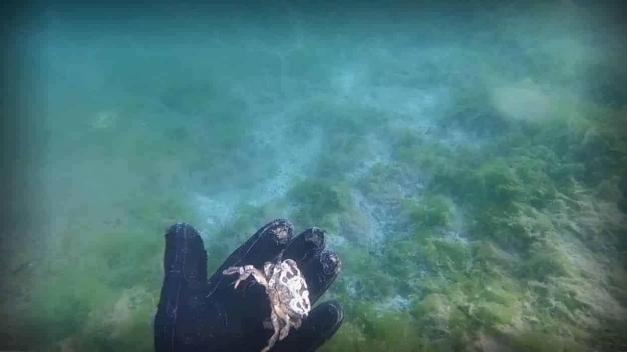 Çürüyen deniz salyası