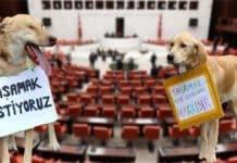 Hayvan hakları yasası