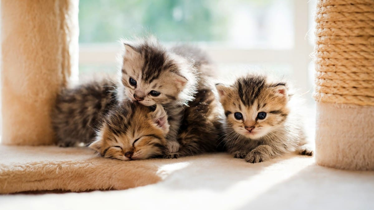 Yavru kedileri