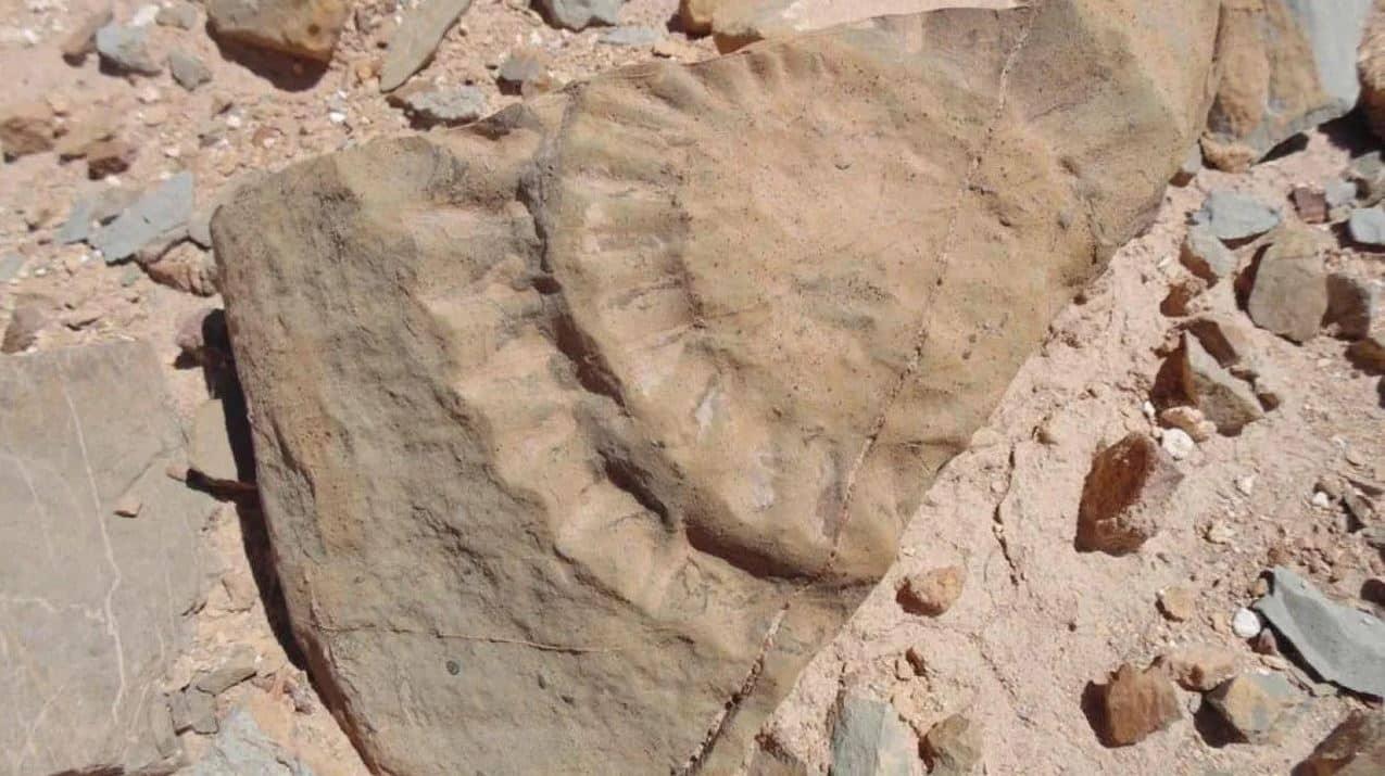 ejderha fosil