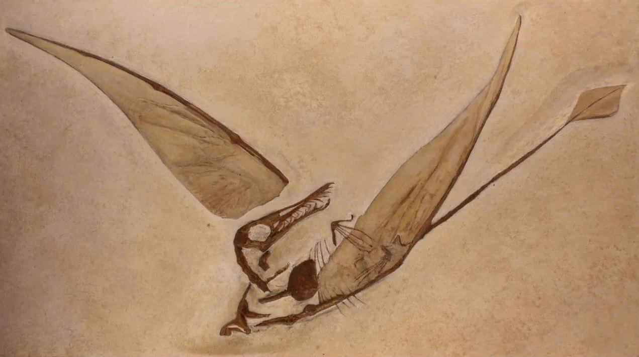 ejderha fosili