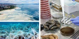 müsilaj balık midye