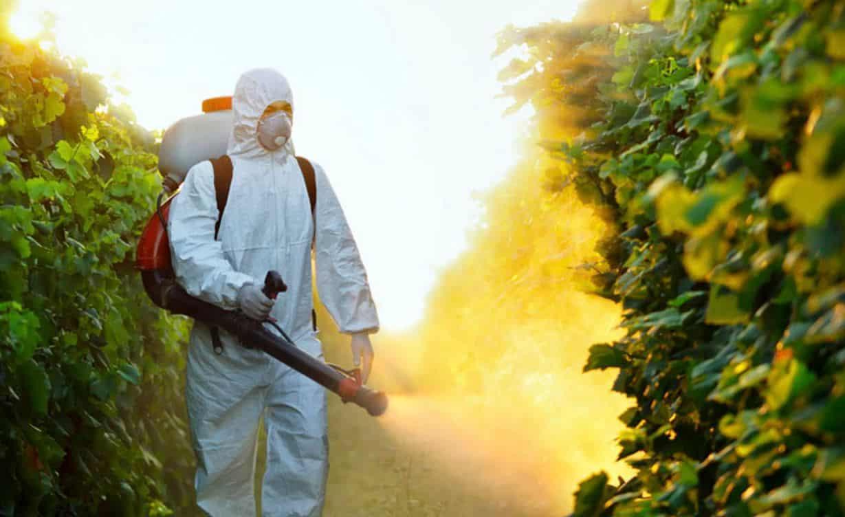 Klorpirifos etil pestisit